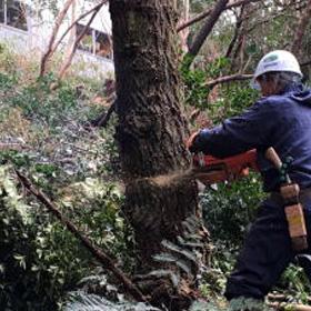 伐採作業1