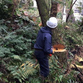 伐採作業2