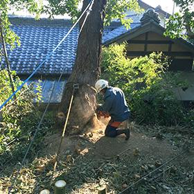 伐採作業4