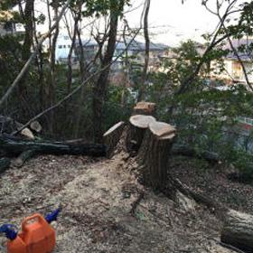 伐採作業9